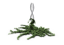 Dna overgrown with ivy Royalty Free Stock Image