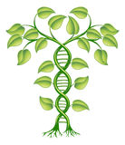 DNA plant concept. Can refer to alternative medicine, crop gene modification Royalty Free Stock Photo