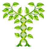 DNA Plant Double Helix Concept Stock Photography