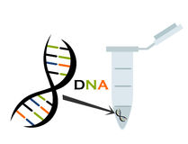 DNA research Stock Images