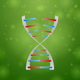 DNA and RNA Stock Image