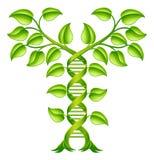 DNA rośliny Dwoistego Helix pojęcie Fotografia Stock