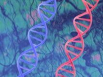 DNA rosso & blu Immagini Stock Libere da Diritti