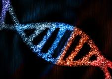 DNA-Samenvatting Stock Afbeeldingen