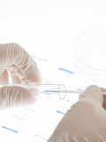 DNA sample. Researcher putting sample of DNA test into a test tube stock photo