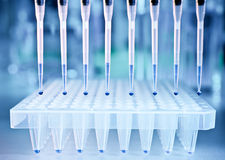 DNA samples and a plate for PCR analysis Stock Photos