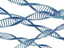 DNA-Schnüre Lizenzfreie Stockbilder