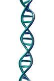 DNA-Schroef die bij het Witte, 3D Teruggeven wordt geïsoleerd Royalty-vrije Stock Foto's