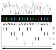 DNA sequencing royalty free illustration