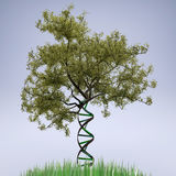 Dna shaped tree trunk Stock Photography