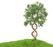 DNA shaped tree with trunks forming the double helix.  Stock Photography