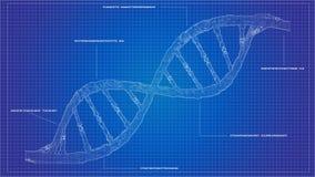 DNA som ordnar ritningRNA som ordnar computational modeller för DNA Arkivfoton