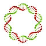 DNA-Stränge lizenzfreie abbildung