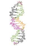 DNA Strand Stock Photos