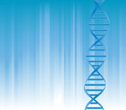 DNA strand. On blue background with copyspace Stock Photos