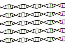 DNA STRAND. Genetic genome on white background Stock Photo