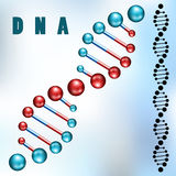Dna strand. Closeup and silhouette Stock Images