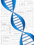DNA strand. DNA double helix over related word background Royalty Free Stock Photography
