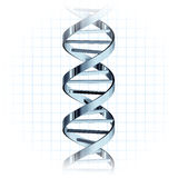 DNA strand genetic helix. DNA strand with a genetic helix isolated Royalty Free Stock Image