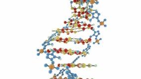 DNA strand stock video