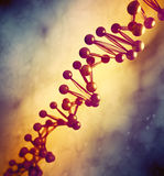DNA strand model Royalty Free Stock Photography