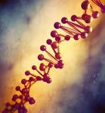 DNA strand model vector illustration