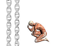DNA strand, muscular man. Royalty Free Stock Images