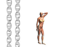 DNA strand, muscular man. Royalty Free Stock Photo