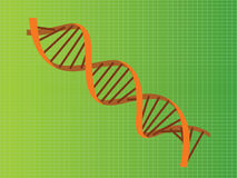Dna strand orange illustration Stock Photos