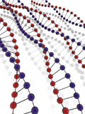 DNA Strands. Red and blue on white background with reflection Royalty Free Stock Photography