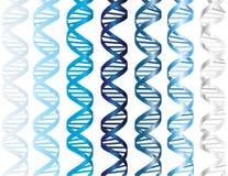 DNA strands Stock Photos