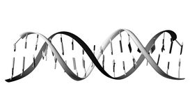 DNA strands. Computer generated illustration of DNA strands on white background Royalty Free Stock Photography
