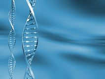 Free DNA Strands Stock Photography - 963692