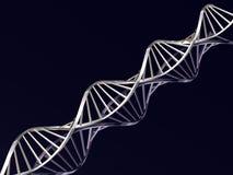 DNA strands Stock Image
