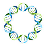 DNA Strands on circle Stock Images