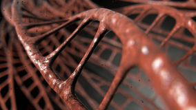 DNA Strands Micro. A microscopic view of sequenced pattern of DNA style strands of flesh on an isolated background - 3D render vector illustration