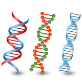 Dna strands. Vector on the white background Royalty Free Stock Photo