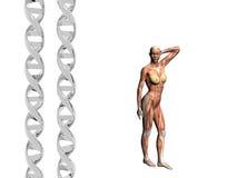 DNA-Strang, muskulöser Mann. Lizenzfreies Stockfoto