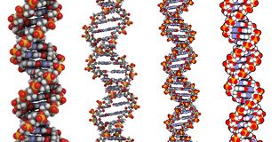 DNA structure. Detailed chemical structure of a segment of DNA. The segment shown is part of the human histone H3 gene Stock Images