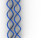 DNA structure royalty free stock images