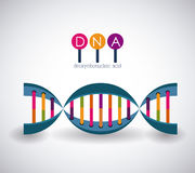 Dna structure chromosome design Royalty Free Stock Photos
