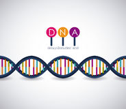 Dna structure chromosome design Stock Photography