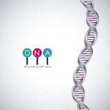 Dna structure chromosome design Royalty Free Stock Photography