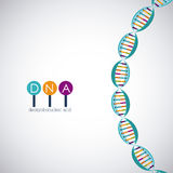 Dna structure chromosome design. Dna structure chromosome icon. Science molecule genetic and biology theme. Isolated design. Vector illustration Stock Photo