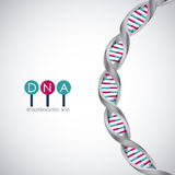 Dna structure chromosome design. Dna structure chromosome icon. Science molecule genetic and biology theme. Isolated design. Vector illustration Stock Images
