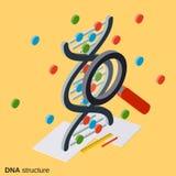 DNA structure, genetics vector illustration. DNA structure, genetics flat isometric vector illustration royalty free illustration