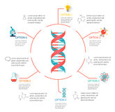 DNA structure infographic Stock Photo