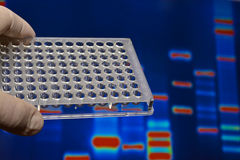 DNA testing in genetic laboratories. Stock Image