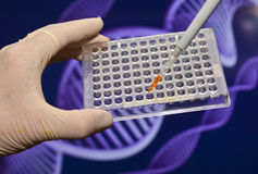 DNA testing in genetic laboratories. Royalty Free Stock Image