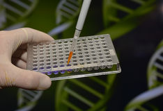 DNA testing in the laboratory. Stock Photos